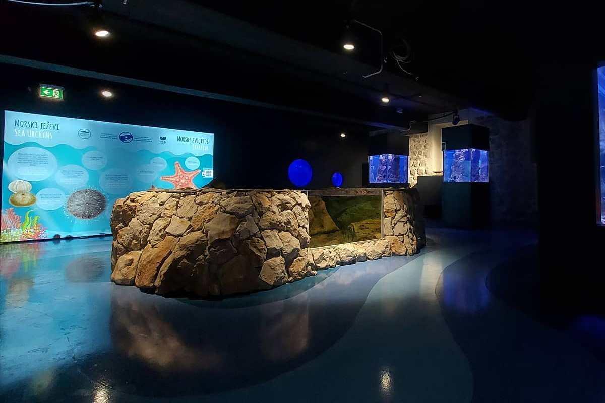 Megnyílt Montenegró első tengeri élővilágot bemutató akváriuma