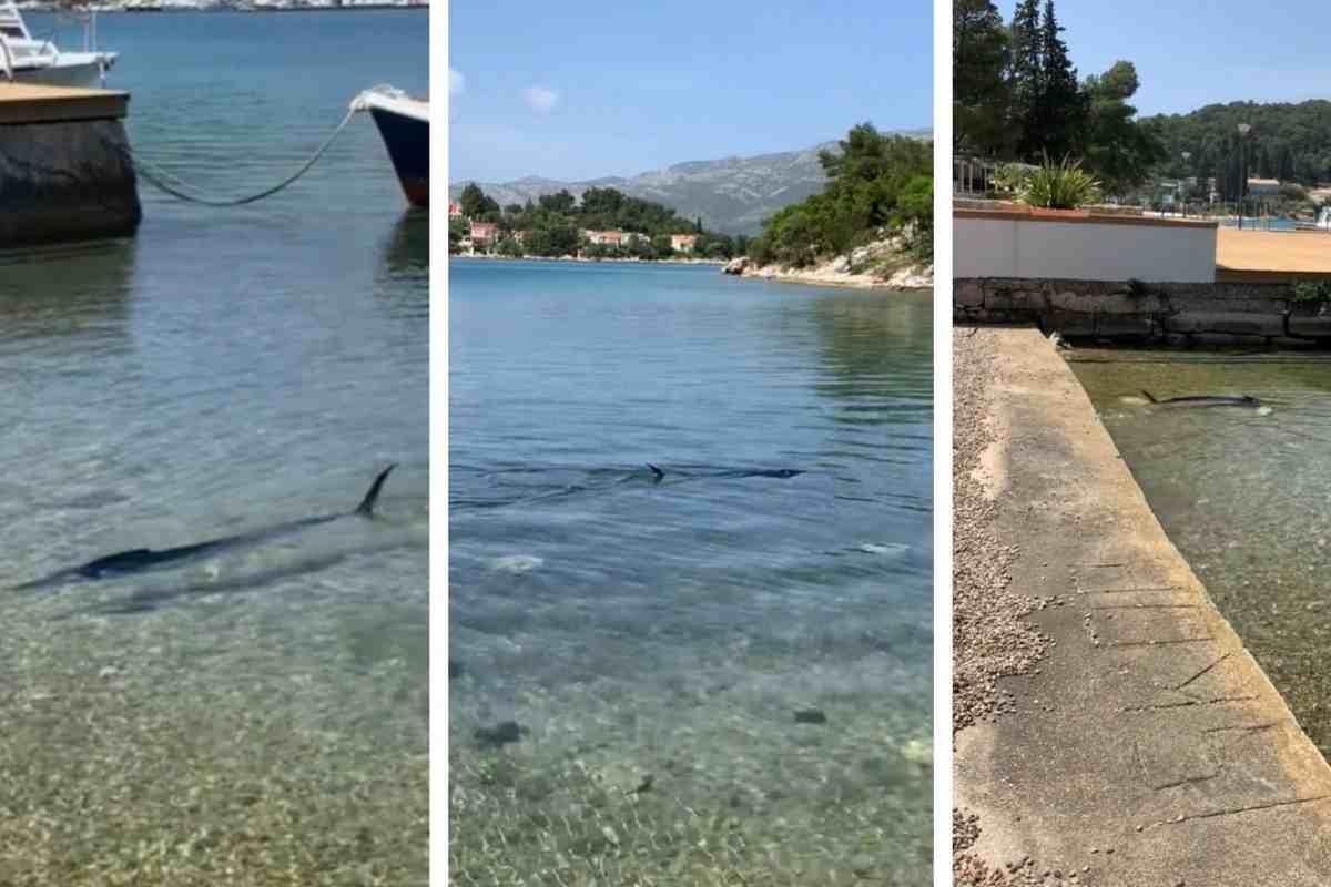 Korčula : sokan cápának hitték ezt a hosszú halat